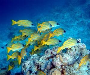 maldives-diving-l