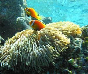 splendid-coral-reef
